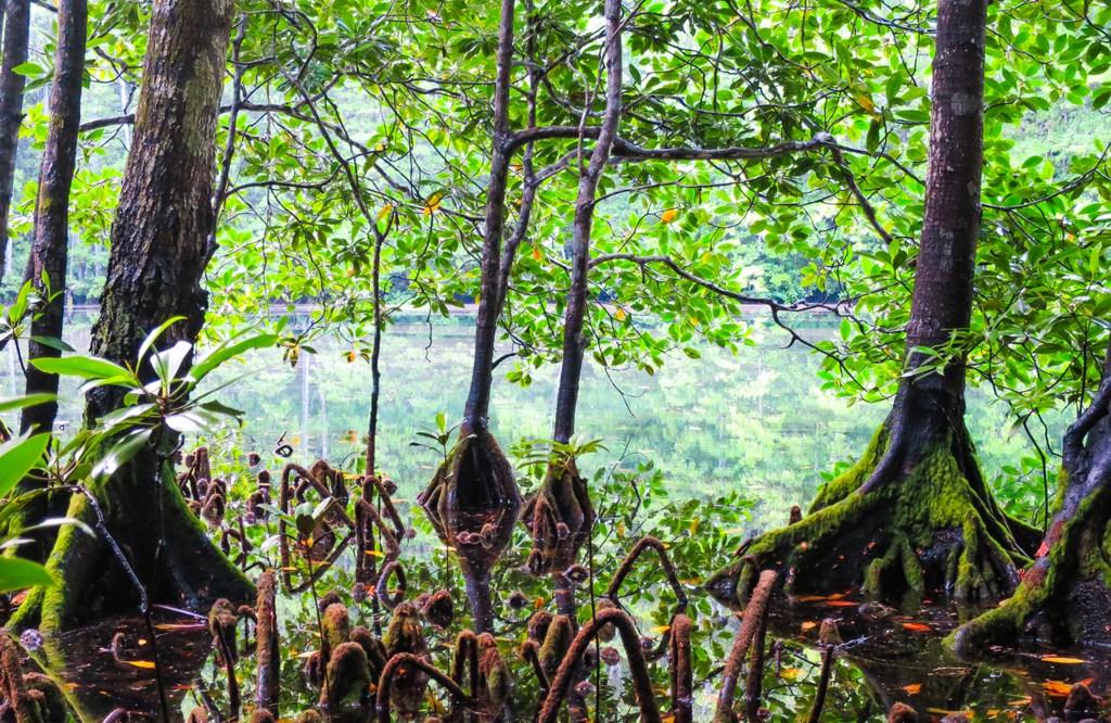 Hutan Bakau