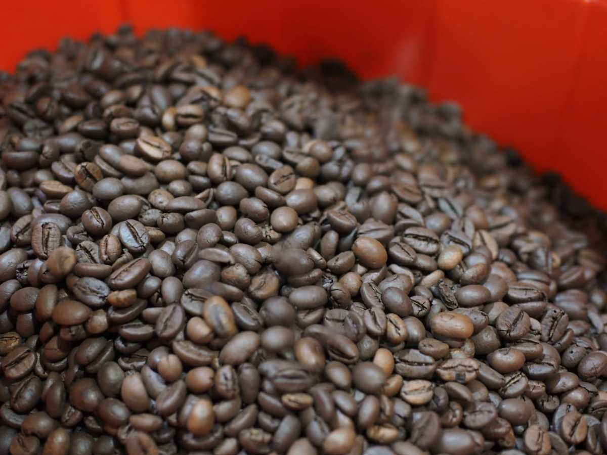 biji kopi setelah roasting