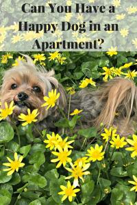 Apartment dog life 3