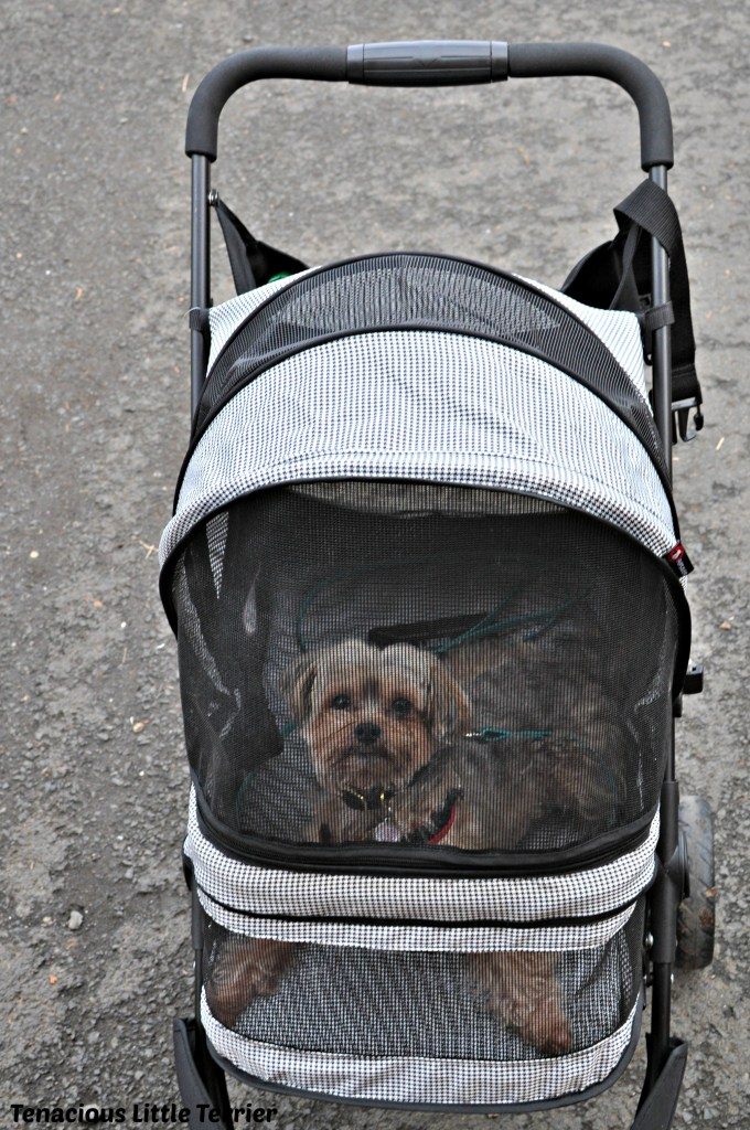 Dog Stroller 4