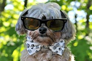 Summer Safety Dog Training Tips