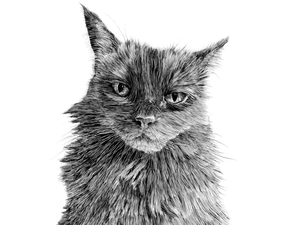 custom pencil drawing of a cat