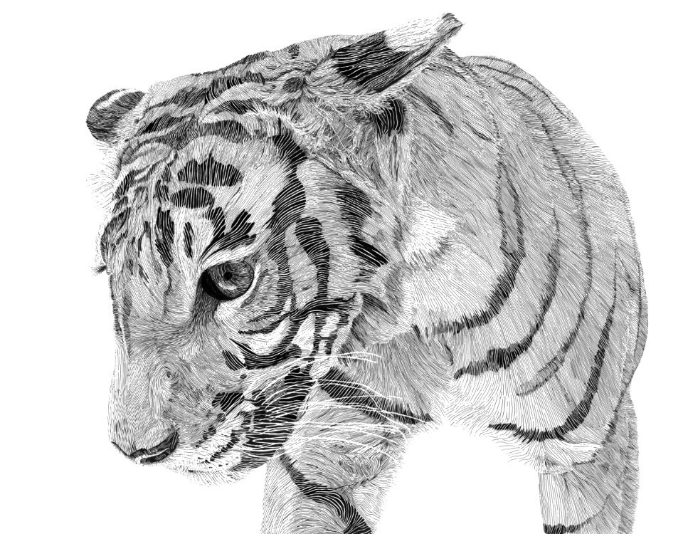 Custom pencil drawing of a bigger cat