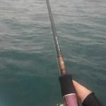新しい竿でボート釣り