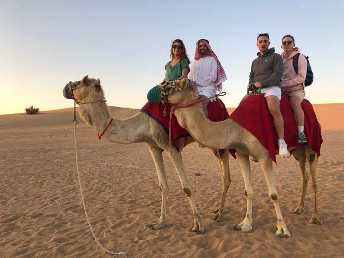dromadaire chameaux dubai