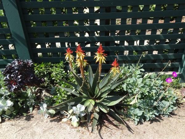 modern succulent garden ideas Succulent garden ideas: mixed succulent borders for a