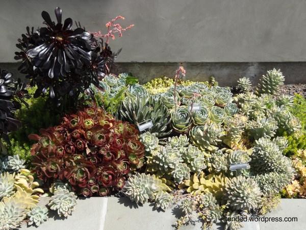 modern succulent garden ideas Succulent garden ideas: mixed succulent beds in a modern