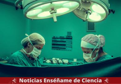 Riñón de cerdo trasplantado con éxito a un paciente humano por primera vez