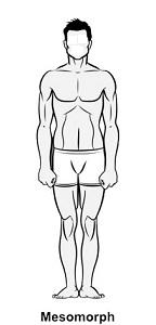 Qué cuerpo tienes Ectomorfo, Mesomorfo o Endomorfo 1