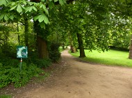 big trees in park Groningen