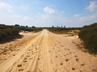 Sand track leading through heather dunes in Ballooërveld nature reserve