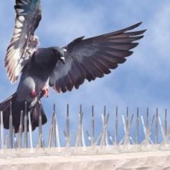 Empresa para el control de aves en tenerife