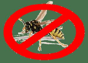 eliminar avispero en Gran Canaria