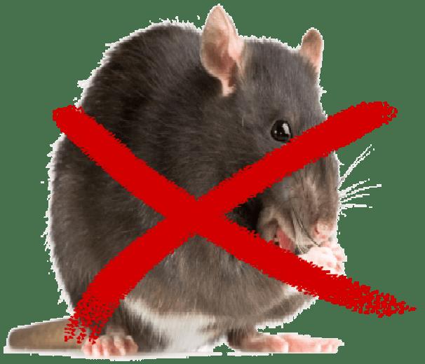 contol de plaga de ratas en tenerife y las palmas de gran canaria