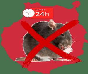 Desratización - servicio, ratas 24 gran canaria