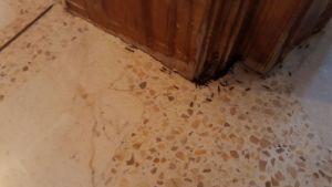 hormigas comiendo cebo en gel