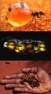 control de plagas de hormigas