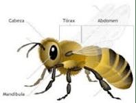 Abejas - La especie más importante del mundo