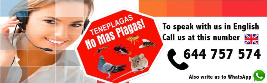 Empresa de plagas en ingles