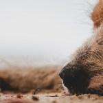 perro y hormigas en fotografia