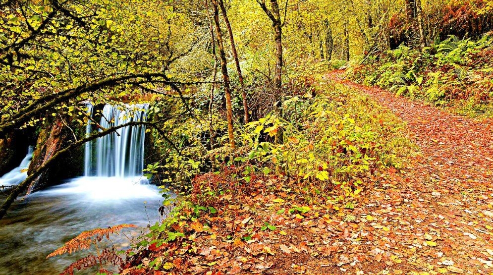 Parque Natural de las Fuentes del Narcea y del Ibias