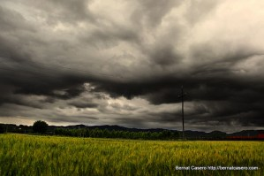 gray day over the field of wheat (yesterday was a nice day)