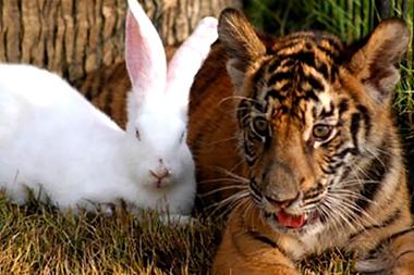 El tigre y la liebre