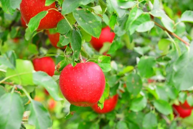 【農薬大国】汚染物扱いの日本の野菜と猛烈な台風の意外な関係