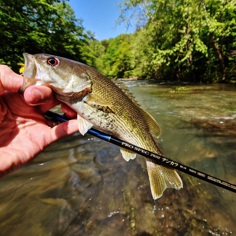 Chris Lynch - Alabama Redeye Bass - Tenkara Angler - Pro Spec