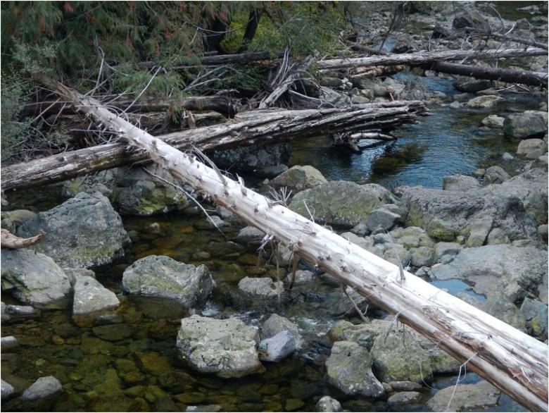 Protective Maze of Fallen Logs Over Boulder Creek.jpg