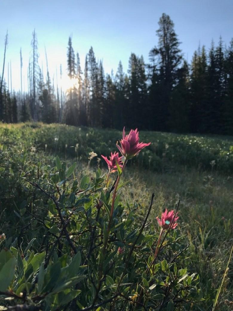 Brittany Aäe - Strange Trails - Flower