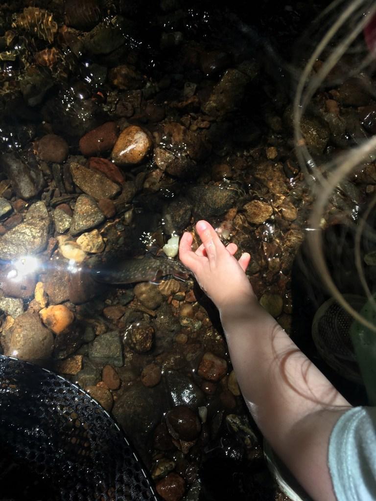 Nate Camp - Toddler Tenkara - Release