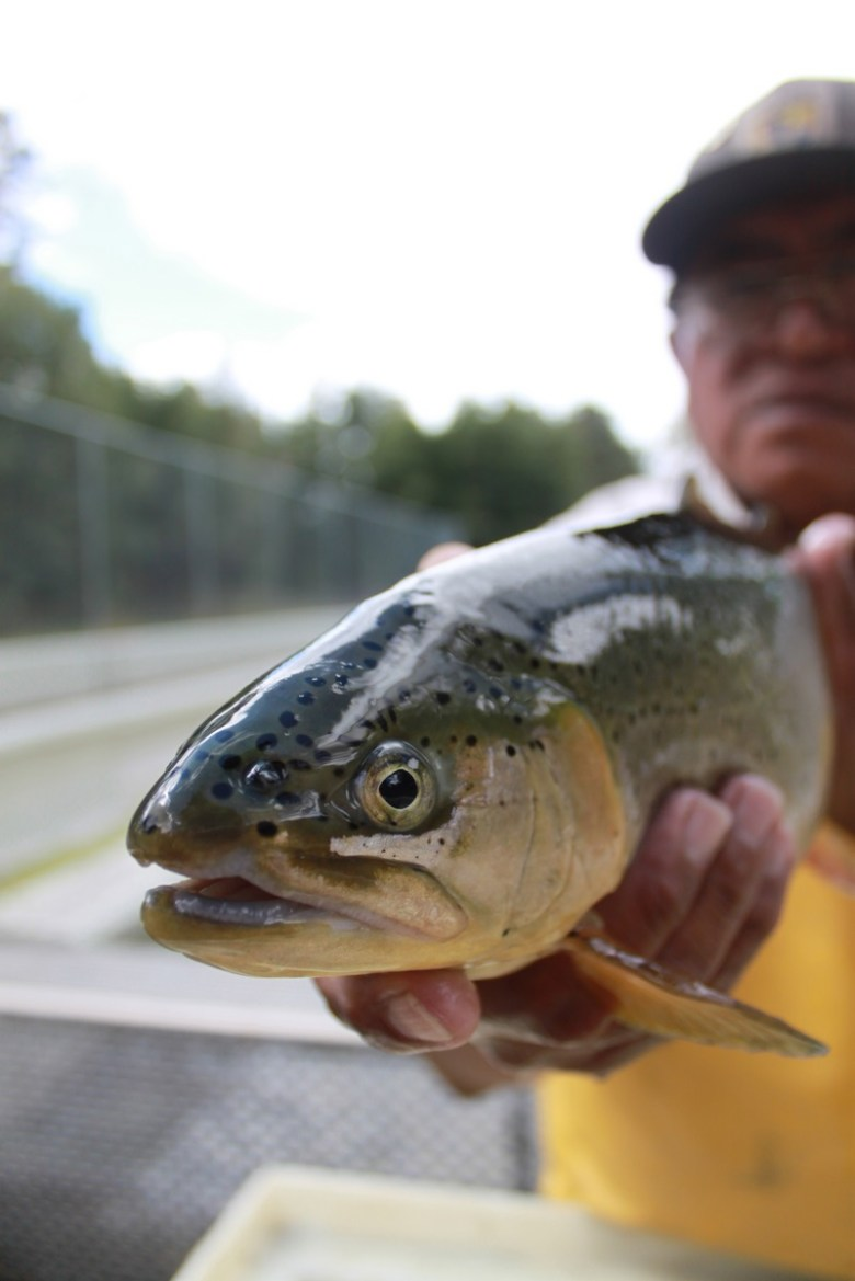 Craig Springer - Apache Trout Fishingenuity - Hatchery