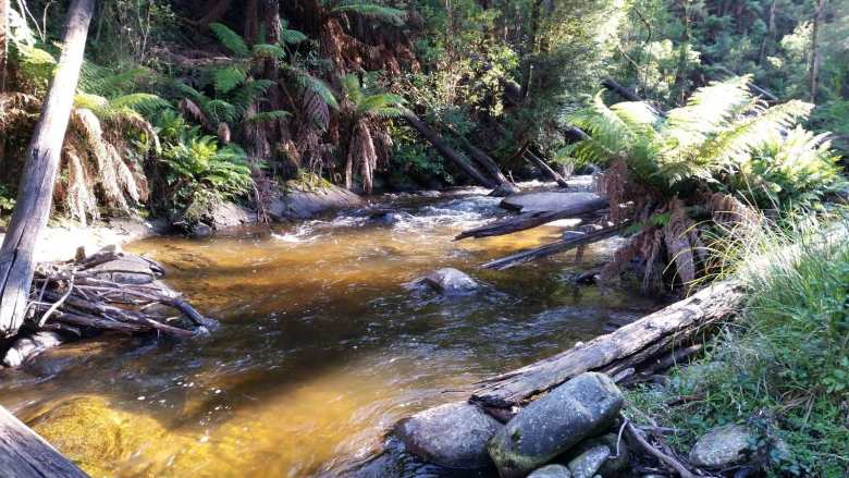 Nick Pavlovski - Fear and Self Loathing Australia- Fern