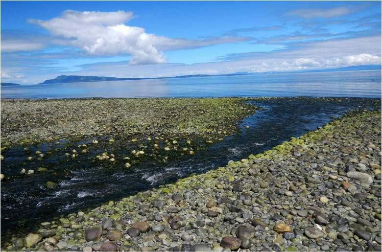 Rory Glennie - Estuarine Fixed Line Fishing - Estuaries