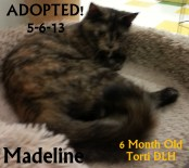 madeline adopted