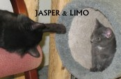 Jasper and Limo playing! August 2013