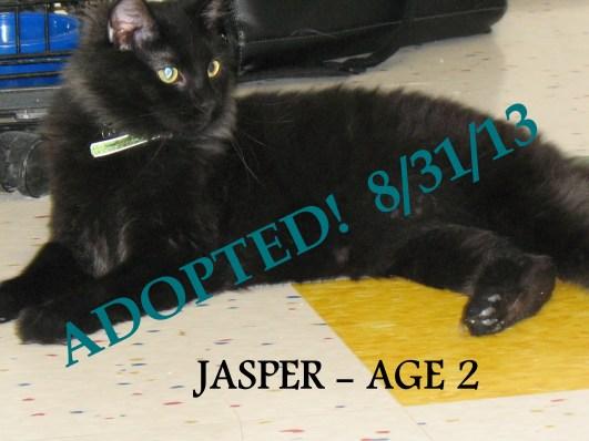JASPER ADOPTED