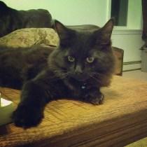Beautiful boy Turbo!