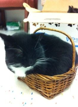 Reed in the toy Basket