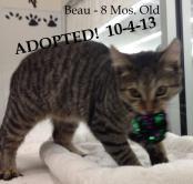Beau - Adopted 10-4-13