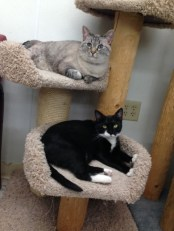 Betty Lou Betty Lou and Miss Mary Lounging on the cat tree on a lazy Wed. night!