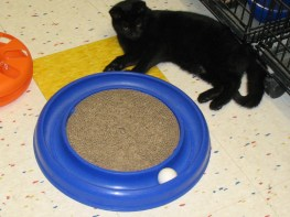 Adam had a big time with the scratcher roller ball toy!