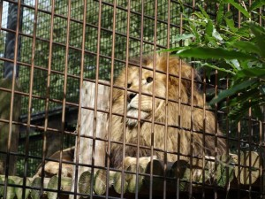 茶臼山動物園 (5)