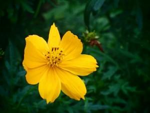 オリンパス TG4 植物 接写 (7)
