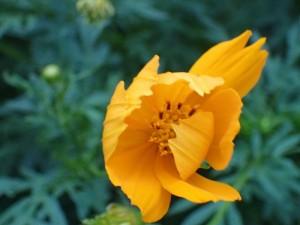 オリンパス TG4 植物 接写 (10)