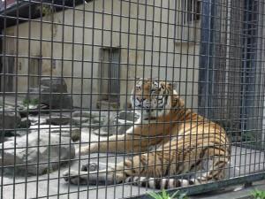 茶臼山動物園 (7)