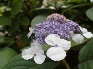 オリンパス TG4 植物 接写 (18)
