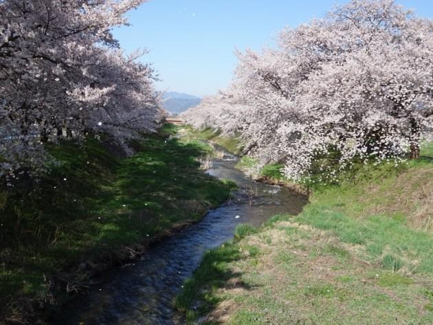 黒沢川 (34)