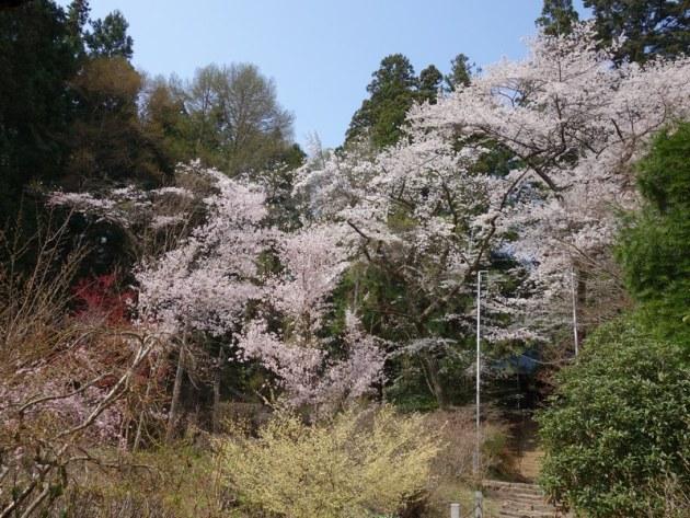 松尾寺 (62)